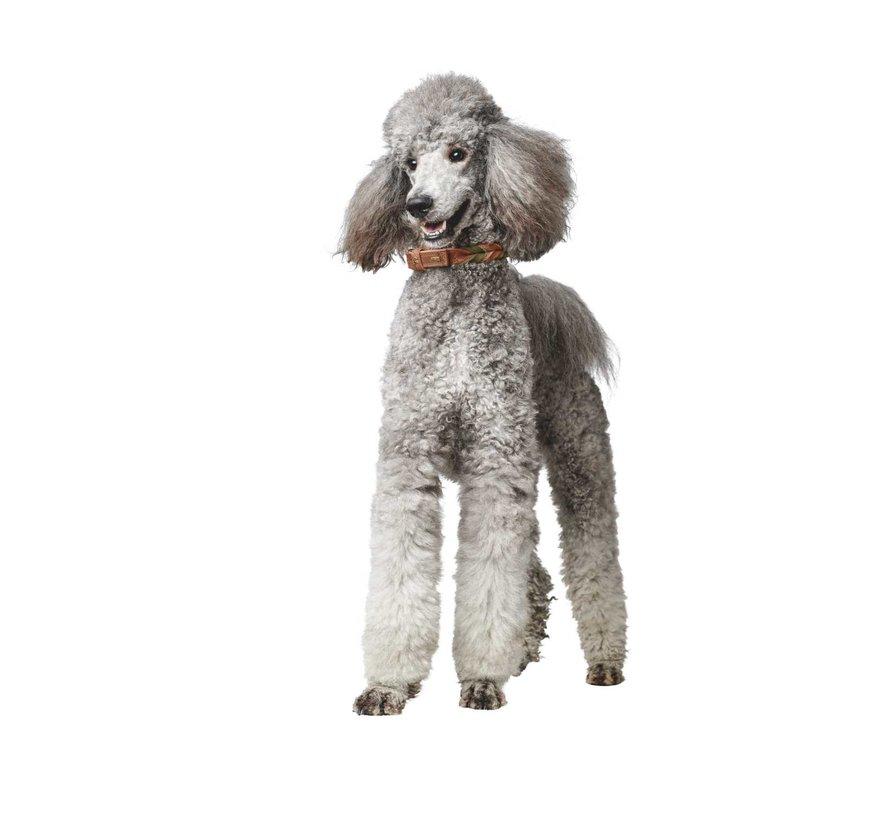 Dog Collar Solid Education Duo Cognac