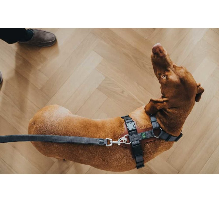 Dog Harness Aalborg Mixed Cognac