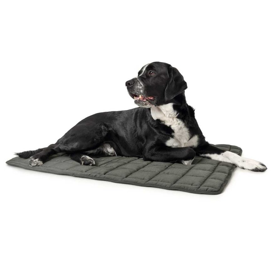 Dog Blanket Hamilton