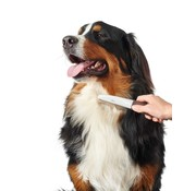 Hunter Dog Comb Spa Moving Teeth