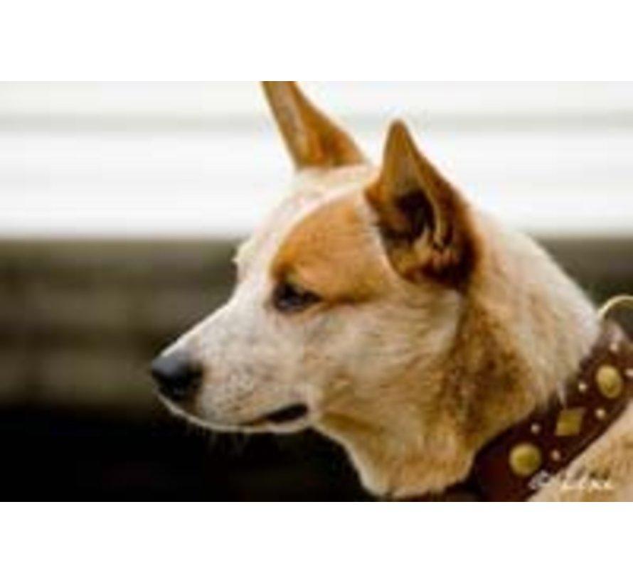 Hondenhalsband Royal Tough Brown