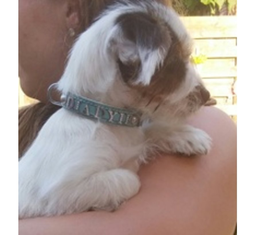 Hondenhalsband met naam Medium Babyblue