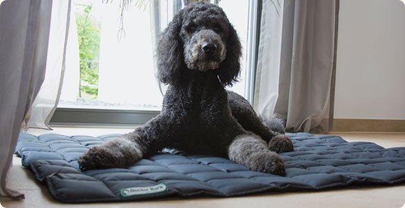 Hondendeken Grijs kopen