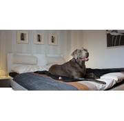 Doctor Bark Dog Blanket Black