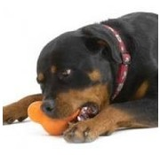 West Paw Design Dog Toy Zogoflex Tux orange