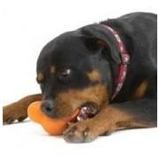 West Paw Design Hondenspeelgoed Zogoflex Tux Oranje