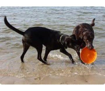 West Paw Design Dog Toy Zogoflex Zisc Orange