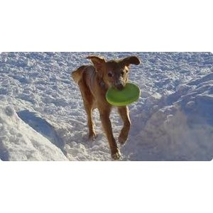 West Paw Design Dog Toy Zogoflex Zisc Lime