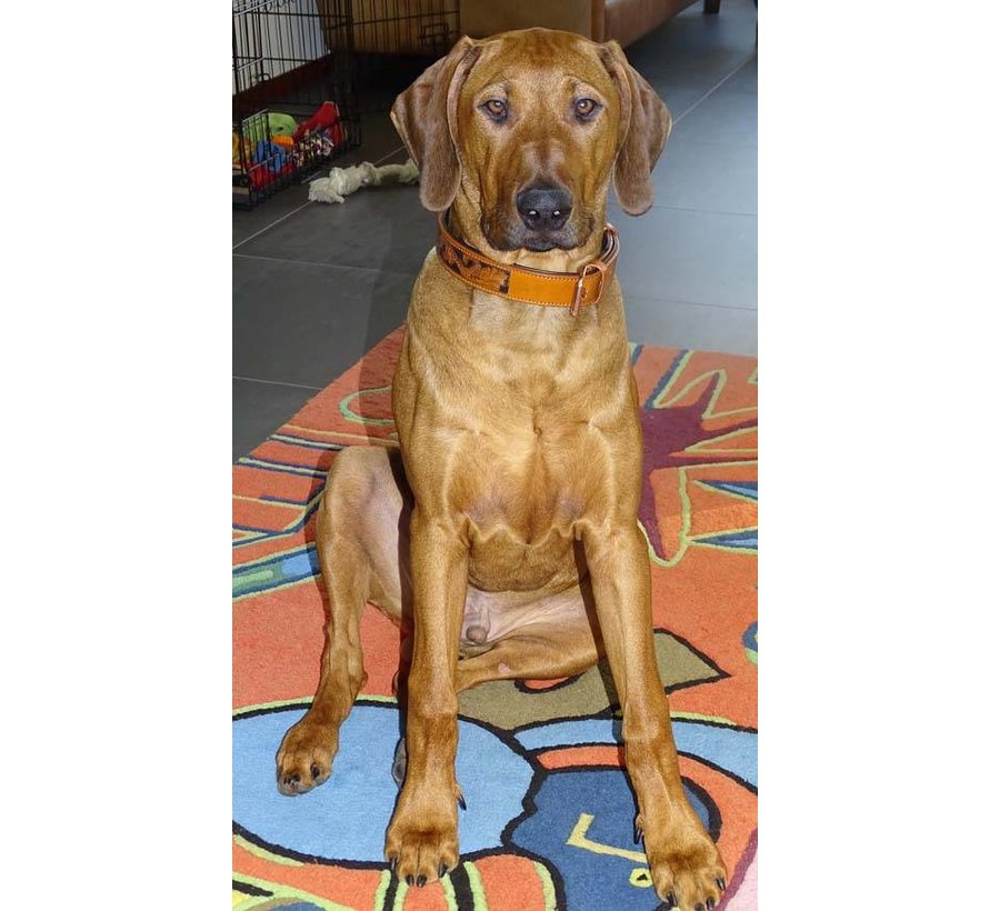 Hondenhalsband Savanne Cognac