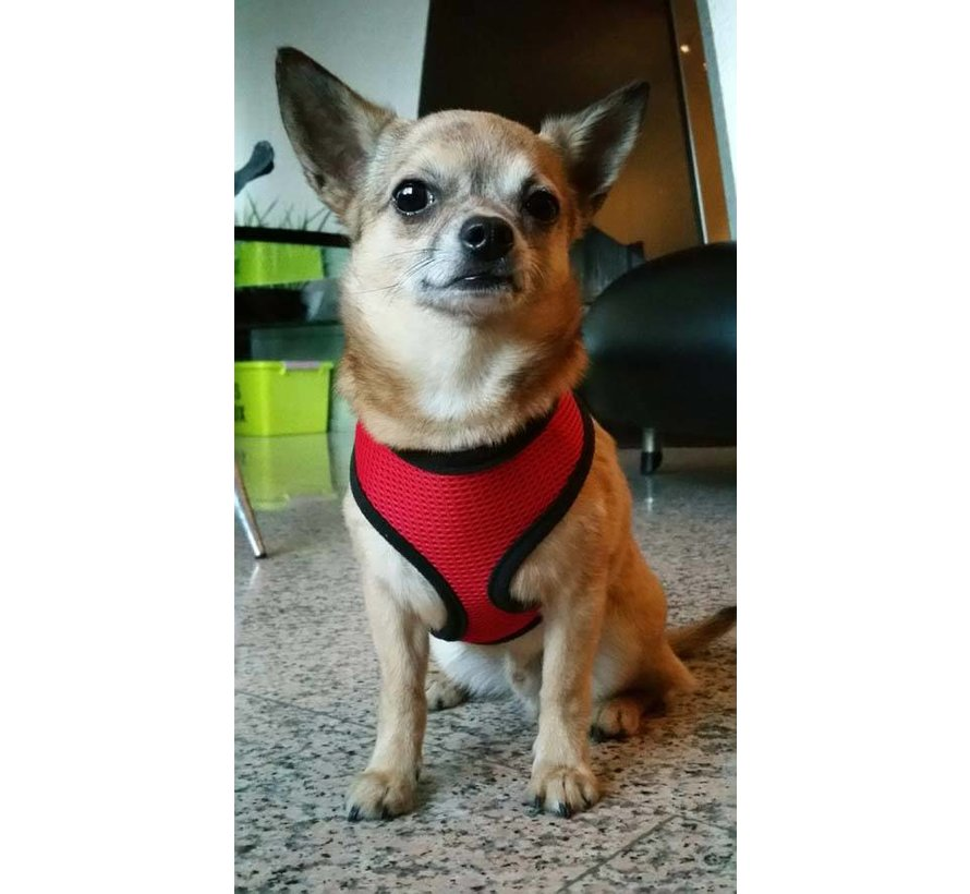 Round Loop Dog Harness Mesh Red