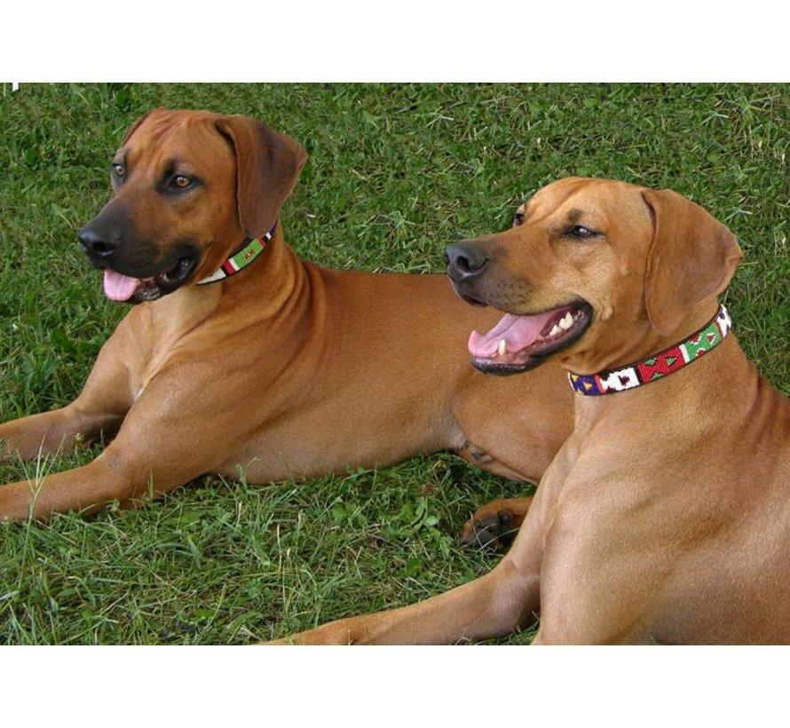 Dog Collar Primary