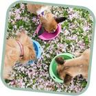 Beco Pets Drinkbak of voerbak Travel Bowl Roze
