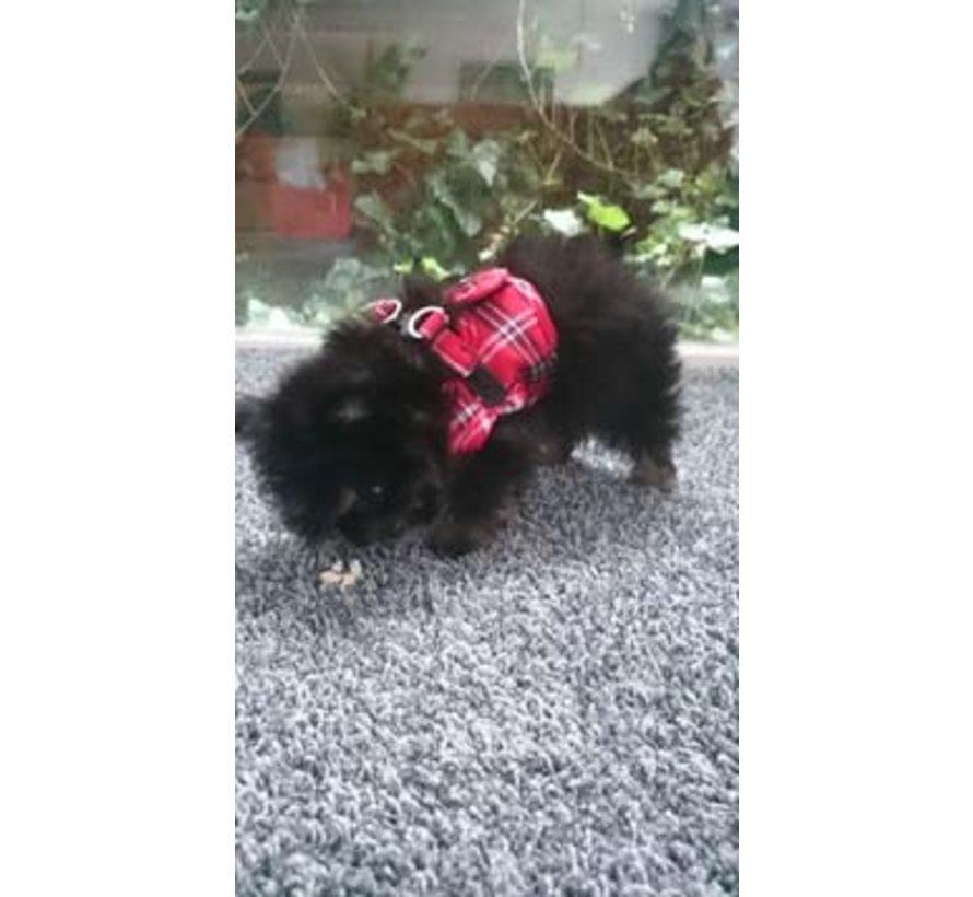 Comfy Dog Harness Scottish Red