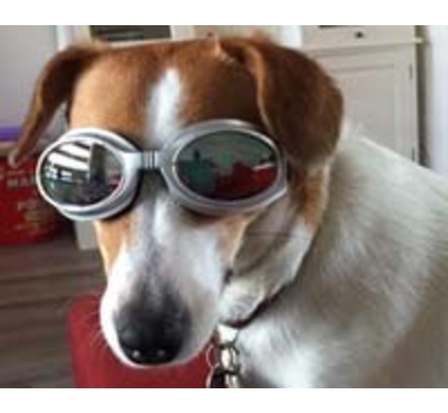 Hondenzonnebril Biker Silver frame/Mirror lens