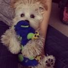 Petstages Hondenspeelgoed Puppy Cuddle Pal