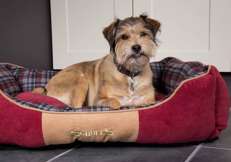 Hondenmand Highland Rood