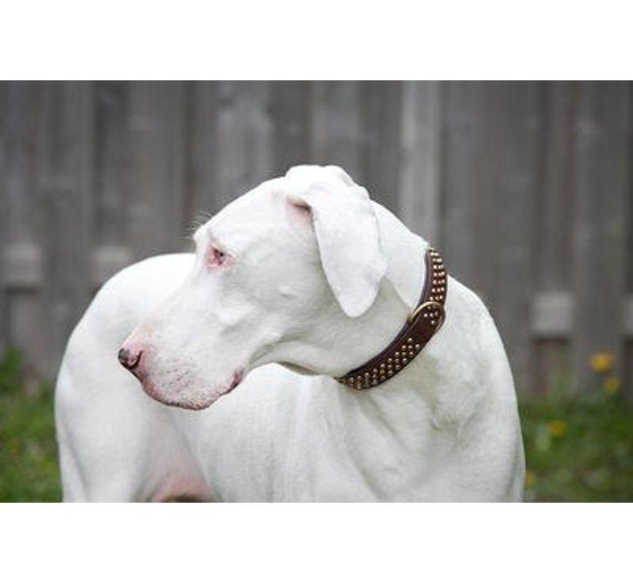 Hondenhalsband Bengal Messing