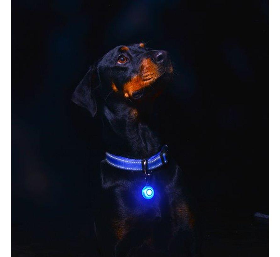 Roglite Veiligheidslamp voor honden Blauw