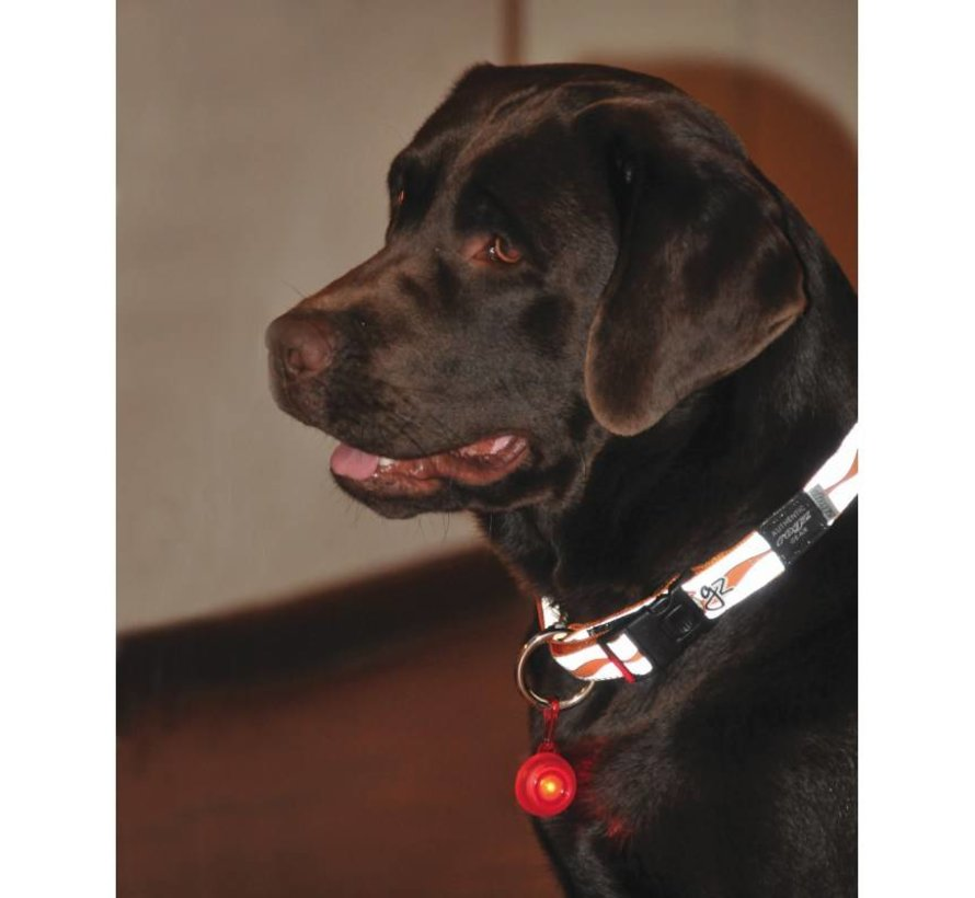 Roglite Safety Lamp for dogs Red