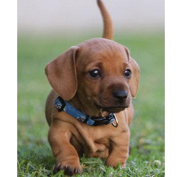 Rogz Puppy Collar YoYo Blue