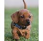 Puppy Halsband YoYo Blauw