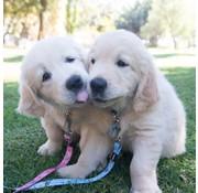 Rogz Puppy Hondenriem YoYo Roze