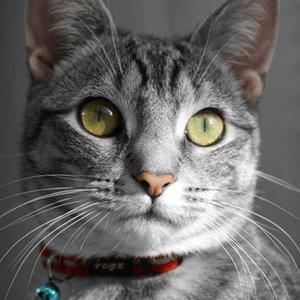 Rogz Cat Collar AlleyCat Red