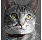 Cat Collar AlleyCat Red