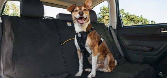 Alles voor de hond in de auto