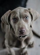 Bepaal de juiste maat voor een hondenhalsband, hondenjasje, hondenmand of hondentuig