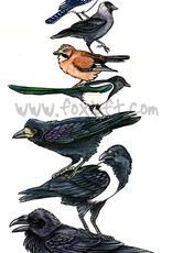 Foxloft Studios Bird Stack - Corvidae