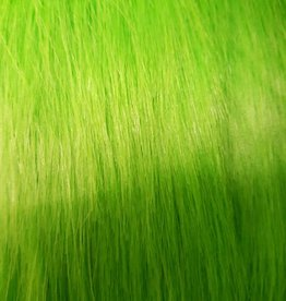 Kitty Fluff (Sold out for now) Ragdoll - Lime Green
