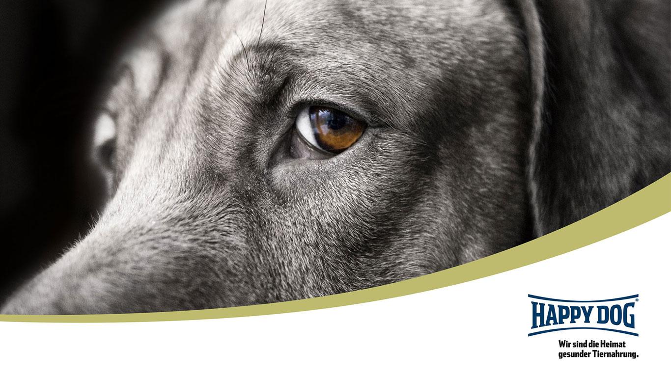 Happy Dog Labrador breed