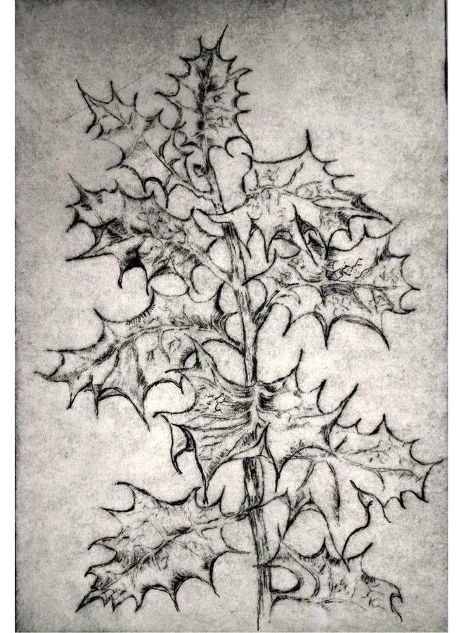 Copy of Eryngium Alpinum