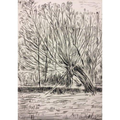 Paul Finn Pollarded Tree