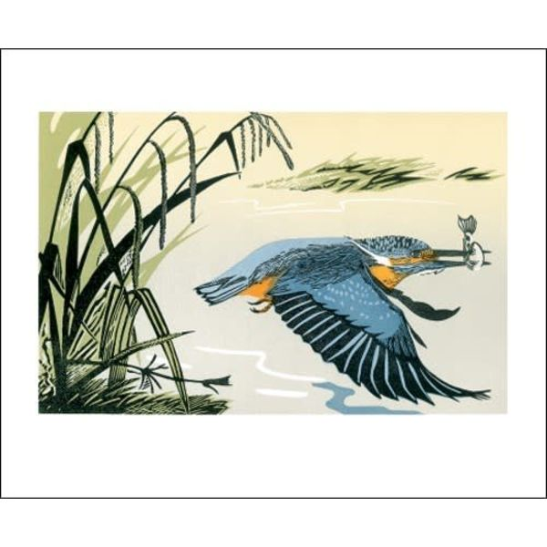 Kingfisher card by Pam Grimmond