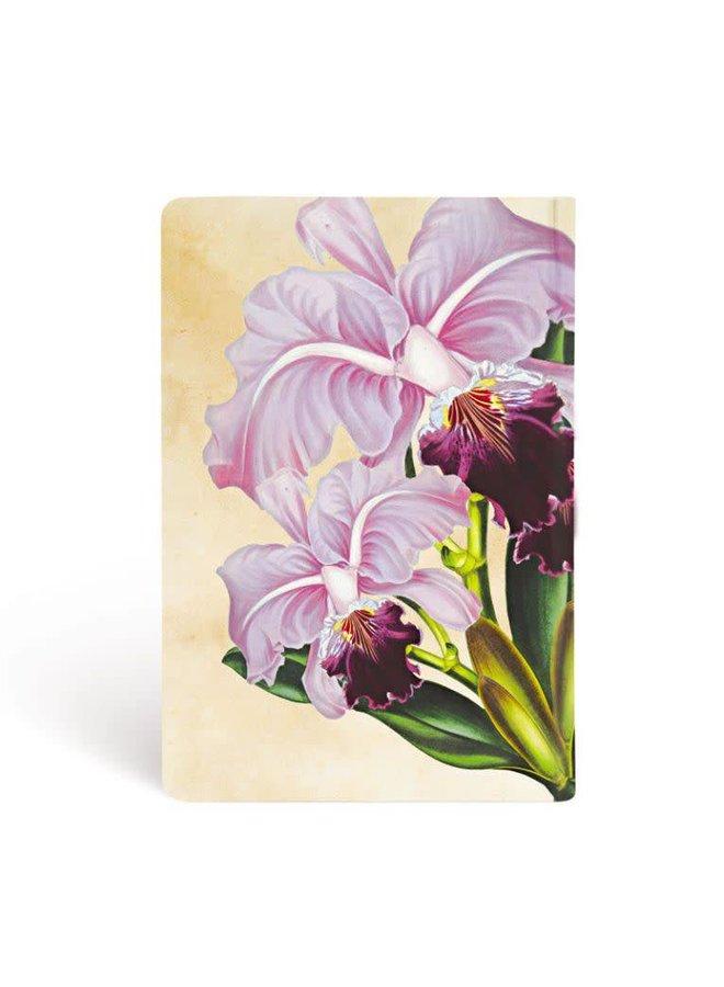 Brazilian Orchid