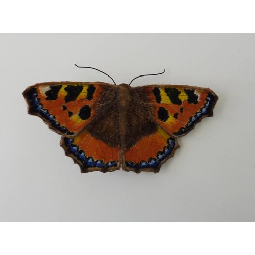Vikki Lafford Garside Broche bordado de la mariposa británica de la concha