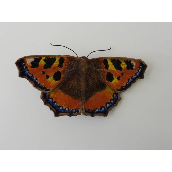 Schildpatt-britische Schmetterlings-gestickte Brosche