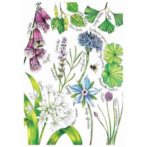 Sophie Cunningham Herb Garden card
