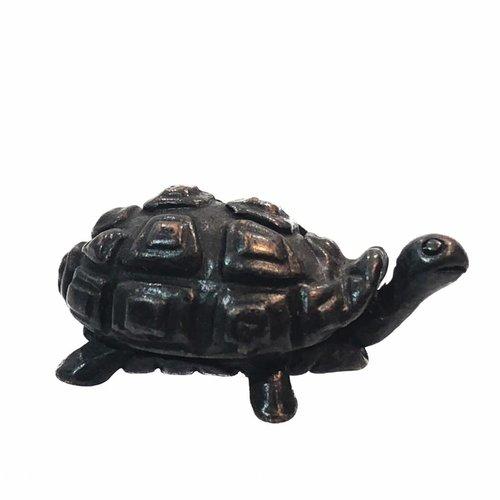 David Meredith Tortoise