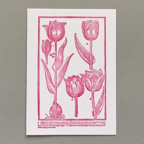 Keyhole Collection Handgefertigte Buchdruck-Karte der Tulpen Hand