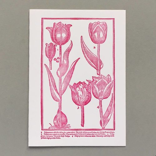 Keyhole Collection Tarjeta de tipografía hecha a mano tulipanes