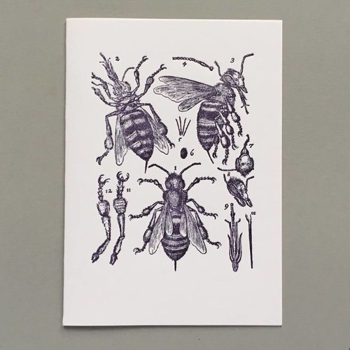 Keyhole Collection Tarjeta de tipografía hecha a mano de anatomía de abeja