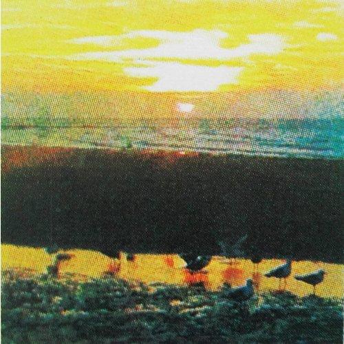 Andrea Robinson Gulls Last Light