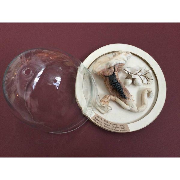 Gastronomic Gastropod