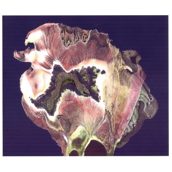 Flora zoología sin marco