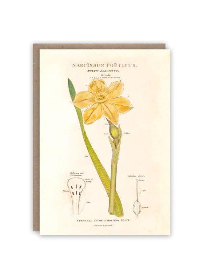 Narcissus Poeticus Musterbuchkarte
