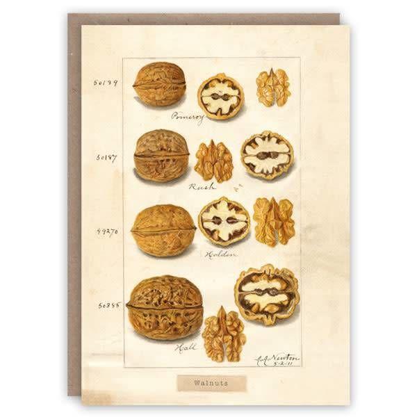 Tarjeta de libro de patrón de nueces