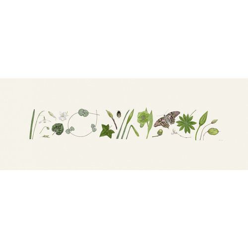 Rachel Pedder-Smith Green Flora and Bee Line print - edition of 200 with mount  012